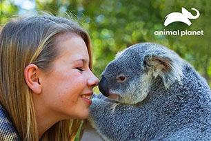 """全球唯一的动物节目专属频道""""动物星球""""启用全新LOGO设计,向历史致敬!"""